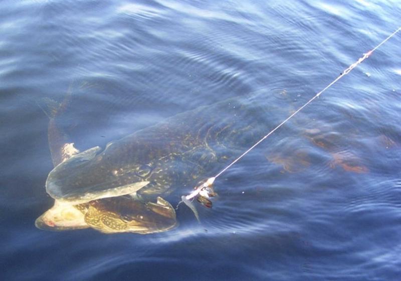 на что лучшие ловить рыбу на реке