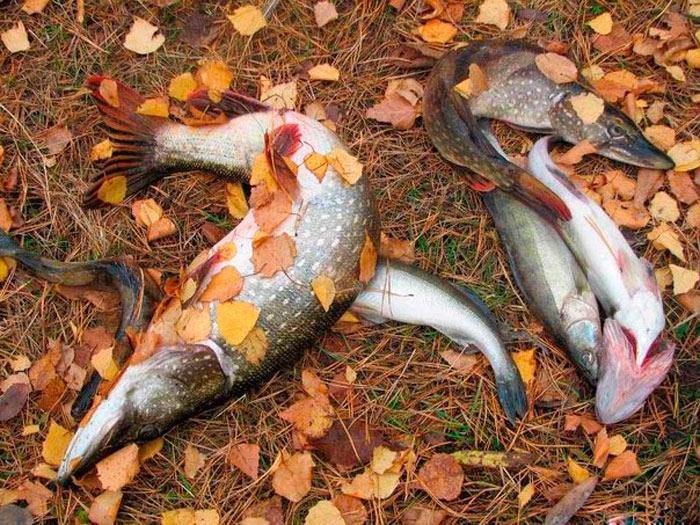 Рыбалка – это всегда эксперименты
